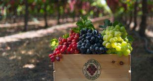 انگور سطح قند خون را کاهش میدهد