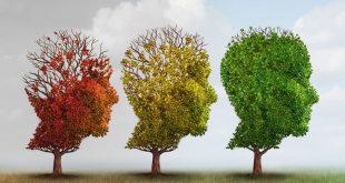 تقویت حافظه با گیاهان دارویی و میوه ها