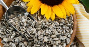 خواص تخمه آفتابگردان در کاهش فشار خون