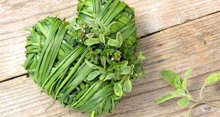 درمان بیماری های قلبی به کمک گیاهان