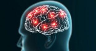 روند کارکرد مغز