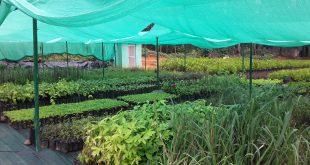 صادرات داروهای گیاهی