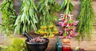 فرهنگ لغت داروهای گیاهی و گیاهان دارویی