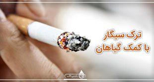 ترک سیگار با کمک گیاهان