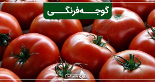 گوجه فرنگی و خواص آن