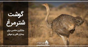 گوشت شتر مرغ جایگزین مناسبی برای بیماران قلبی و عروقی
