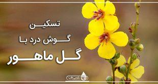 تسکین گوش درد با گل ماهور