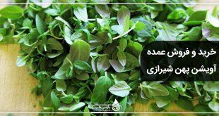 فروش عمده آویشن پهن شیرازی
