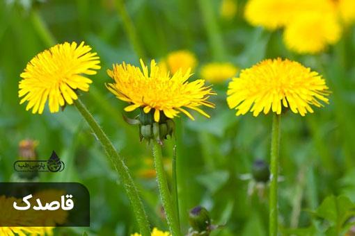 گیاهان تلخ اما با خاصیت