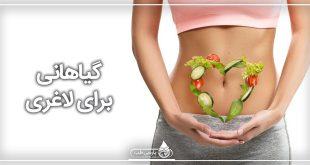 گیاهانی برای لاغری