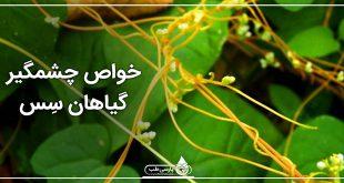 خواص چشمگیر گیاهان سِس