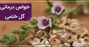 گل ختمی و خواص درمانی