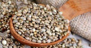 گیاه شاهدانه در کاهش لرزشهای بیماری ام اس (ms) مفید است!