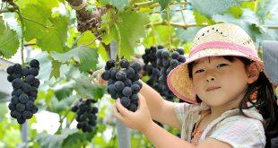 نقش انگور در دیابت و فشار خون