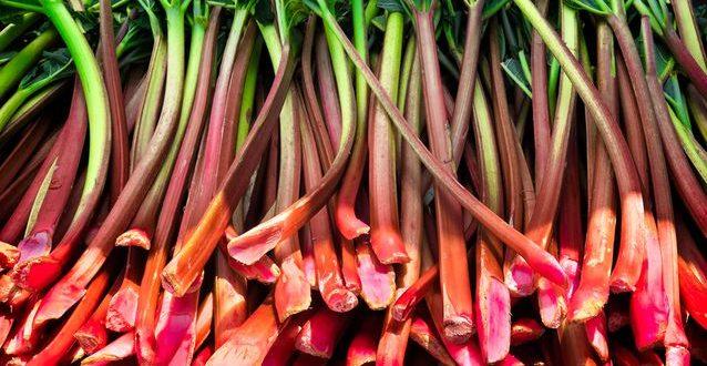 خواص درمانی گیاه ریواس