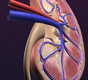 اثر دیابت بر روی کلیه ها