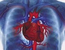 نقش اميزش جن * سي در سلامت قلب