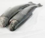 خواص ماهي كيلكا