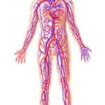 درمان ضعف گردش خون