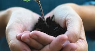 صدها گياه دارويي در خطر انقراض است.