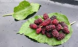 مناسبترین میوهها برای بیماران دیابتی