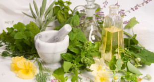 تولید گیاهان دارویی در ایران کم میباشد !