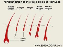 آیا تراشیدن باعث پرپشت شدن مو می شود