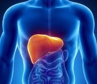 کبد چرب به سراغ 80 تا 90 درصد مبتلایان به چاقی مفرط میآید