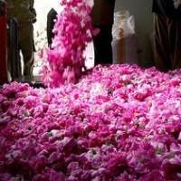 علاج ضربة الشمس بماء الورد الجوري