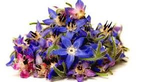 دم کرده گل گاو زبان با لیمو عمانی، دم نوش مناسبی هنگام سرماخوردگی
