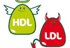 تفاوت بین کلسترول خوب (HDL) و کلسترول بد (LDL)