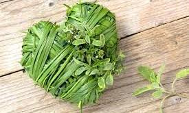 درمان بیماریهای قلبی به کمک گیاهان و مکملهای غذایی