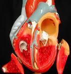 افزايش تصاعدي بيماري هاي قلبي