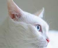 اسكار ، گربه پيشگو