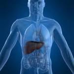 درمان کبدهای چرب