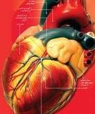 نقش روغنها در سلامت قلب و عروق