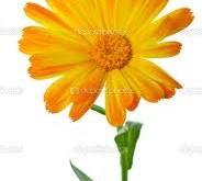 گل های درمانگر