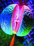 تحقیق بر روی مغز انگلیس و چینی زبانها
