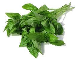 فیتواستروژن و سبزی ریحان