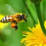 راههاي تشخيص عسل طبيعي از عسل تقلبي