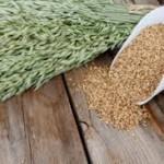درمان نارحتی های کلیه با گیاه یولاف