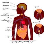 غدد درونی بدن