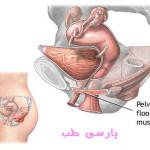 تقویت عضلات کف لگن – تمرینات کیگل (کگل)