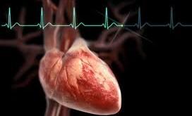 بایدها و نبایدهای تغذیهای برای مراقبت از قلب و عروق
