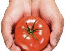 گوجه فرنگی ضدآفتاب طبیعی و اكسیر جوانی