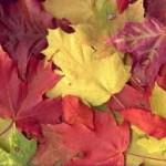 ۴بیماری رایج پاییز را بشناسید