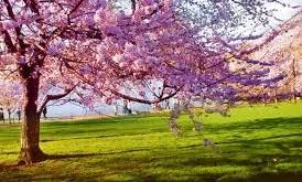 فصل بهار و طب سنتی