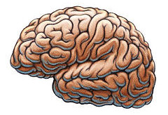 ١٠ عادتی که به مغز آسیب میرساند