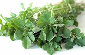 شنبلیله گیاهی برای درمان دیابت