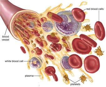 مقدار پلاکت ها و سایر اجزای خون